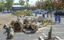 La tala de árboles por las obras del BEI asciende ya a 122 ejemplares
