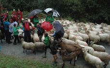 El cambio climático se ceba con las ovejas del Duranguesado