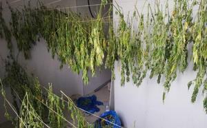 Localizan 22 kilos de marihuana secándose en un convento abandonado de Leioa