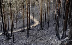 La prueba de montaña Mello Saria ayudará a reforestar parte de la zona incendiada de Muskiz