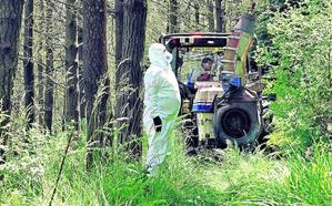 La peste del pino rebaja su virulencia en Bizkaia tras un año más seco de lo habitual