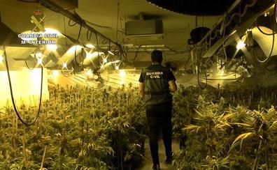 Incautadas 4.638 plantas de marihuana en un chalet de lujo de Toledo