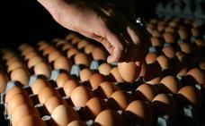 Paralizan la comercialización en la granja de Segovia de los huevos que causaron el brote de salmonelosis en Bizkaia