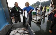 Los puertos de Bermeo y Ondarroa han recibido 1.590 toneladas de bonito