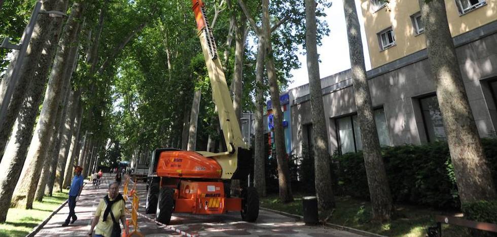 Vitoria analizará posibles podas en los árboles del paseo Fray Francisco