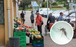 Euskadi detecta por primera vez ejemplares de mosquito tigre adultos en Irún