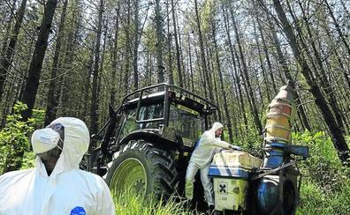 La Diputación confirma la recuperación de los pinares afectados por el hongo