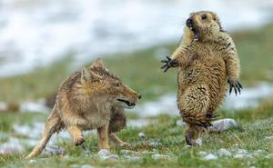 El otro día de la marmota