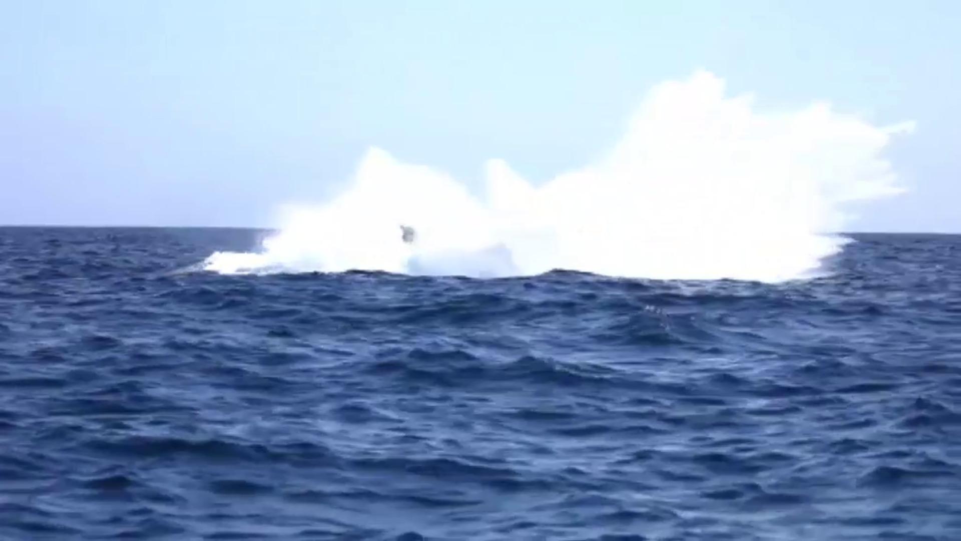 Espectaculares imágenes de un grupo de ballenas en plena migración