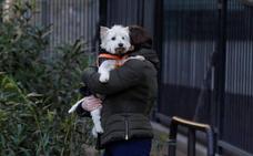 La OMS ve «cada vez más pruebas» de la transmisión de Covid de humanos a felinos y perros