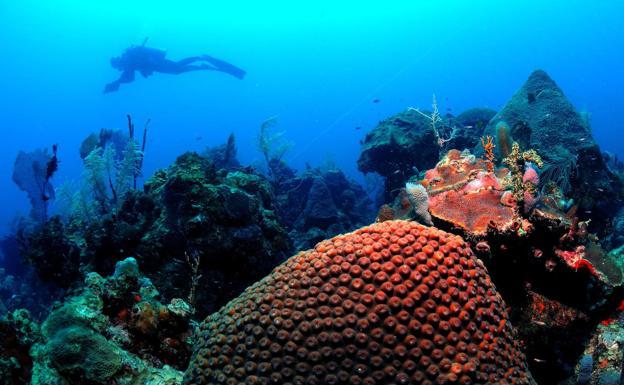 Los océanos, como este fondo marino en Córcega, atesoran una variada riqueza.