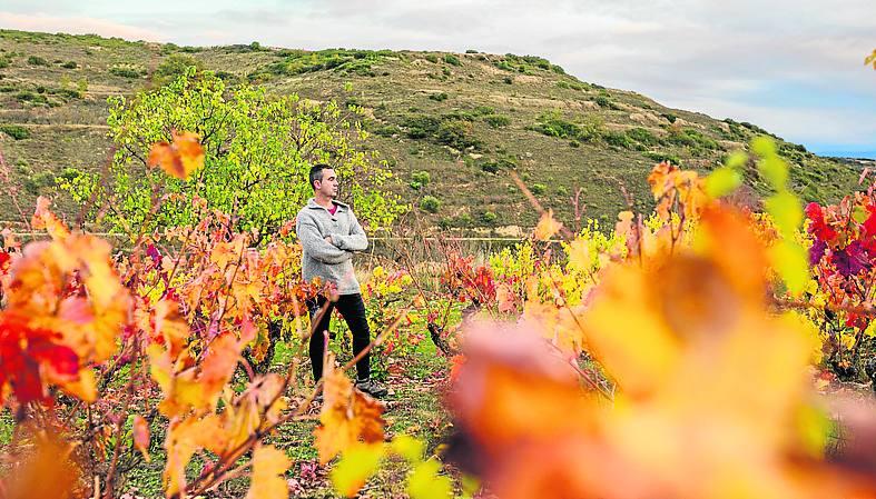 Al bodeguero le apasiona pasea por los viñedos de Laguardia./IGOR MARTÍN