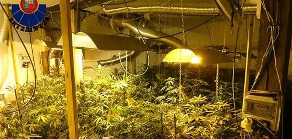 Localizada en Mundaka una nave industrial con 280 plantas de marihuana