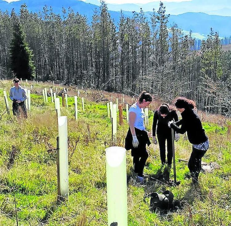 Lurgaia busca financiación para sumar 48 hectáreas al bosque autóctono de Urdaibai