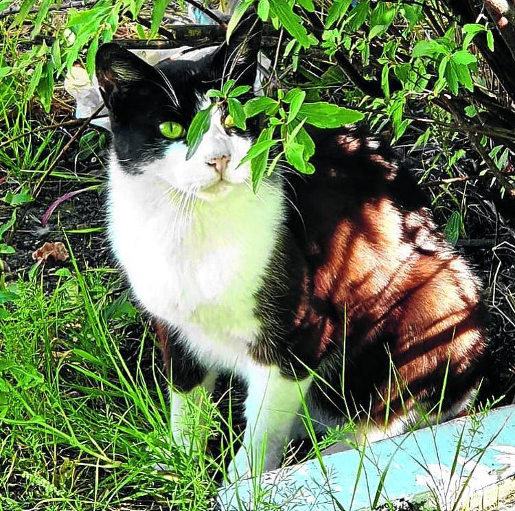 Denuncian la deficiente gestión de la población felina de Sestao