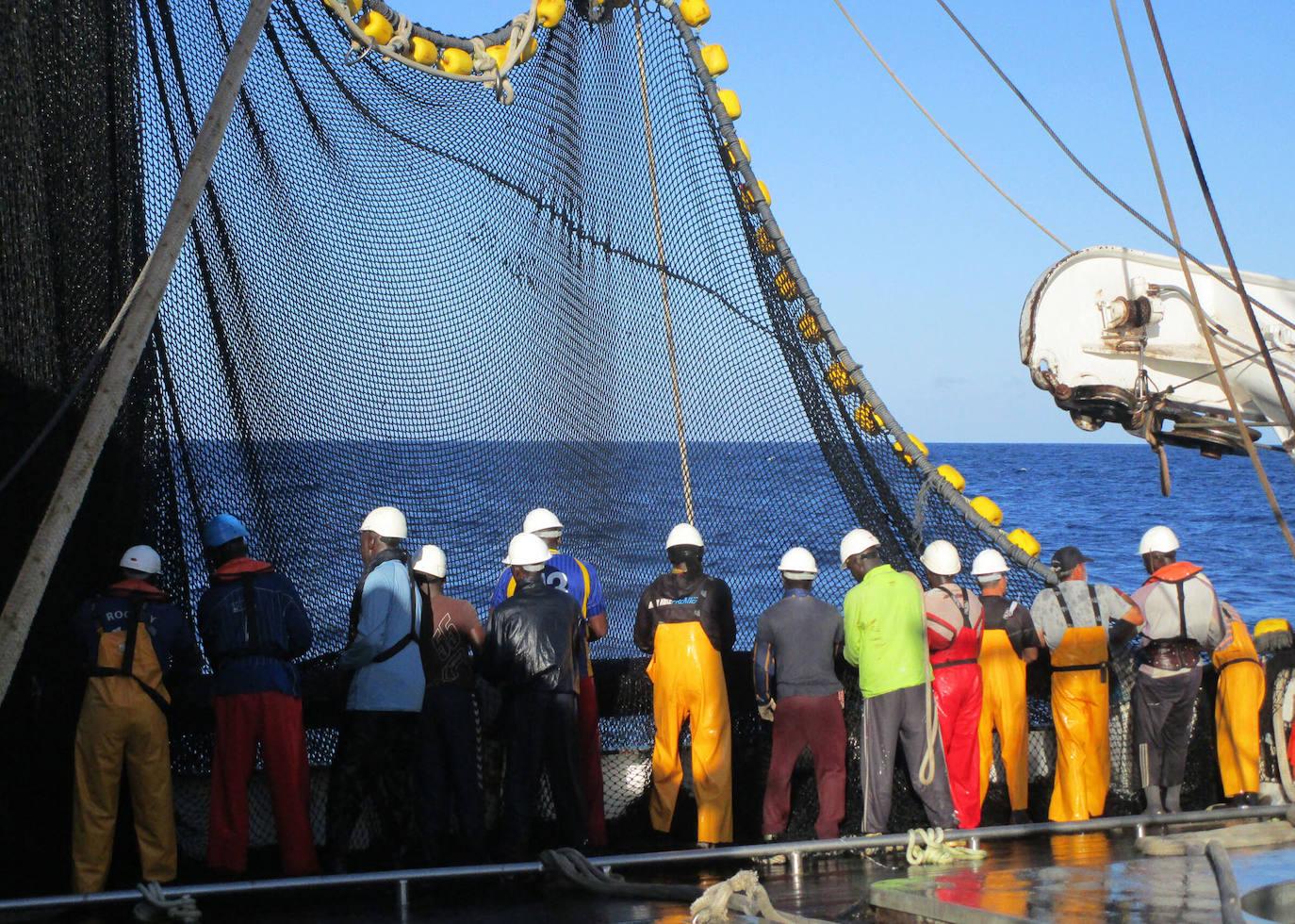El sector atunero «perplejo» ante la cesión de 'yellowfin' a flotas con «artes ilegales»