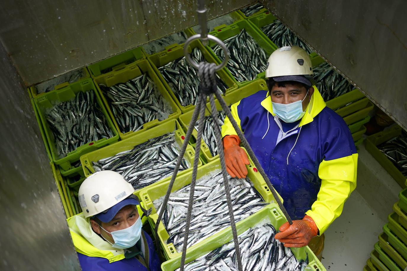 Las primeras anchoas del año se comercializan a 4,10 euros el kilo en Ondarroa