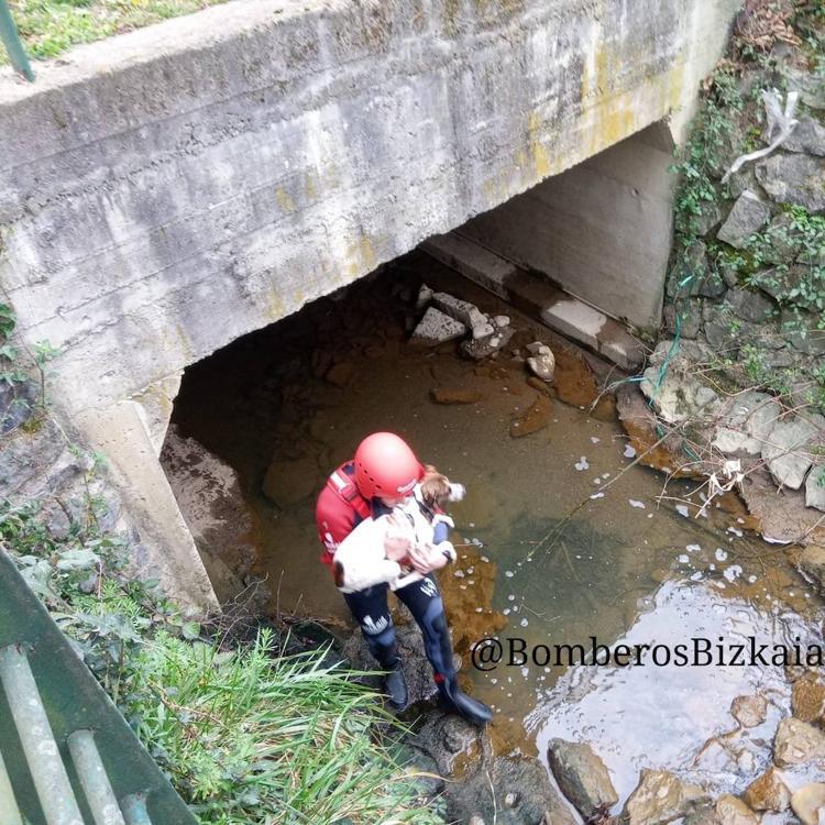 Los Bomberos rescatan a un perro que había caído al río en Abadiño