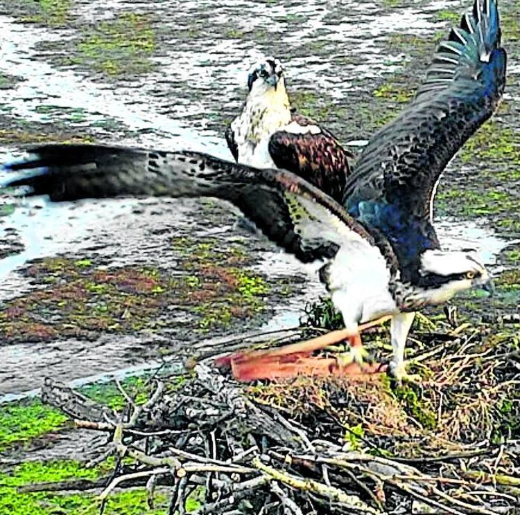 'Landa' y 'Roy' enseñan su nido de amor