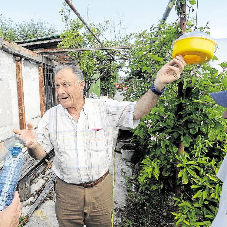 Vecinos de Getxo alertan de la expansión de la avista asiática
