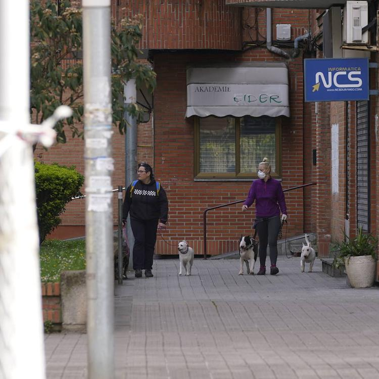 Durango retira de media al año una treintena de perros de sus calles