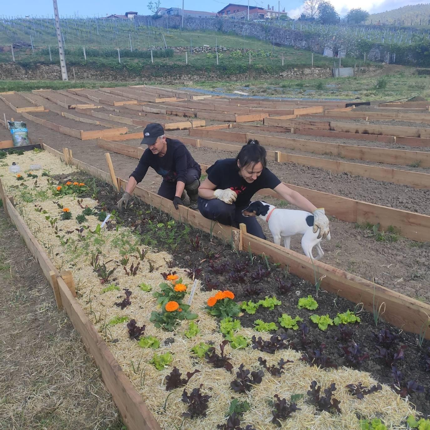 Bakio se vuelca en la agricultura ecológica de autoconsumo con los huertos urbanos