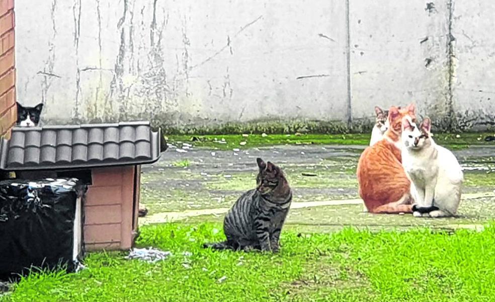 Una colonia de gatos enfrenta a los trabajadores de la prisión de Basauri
