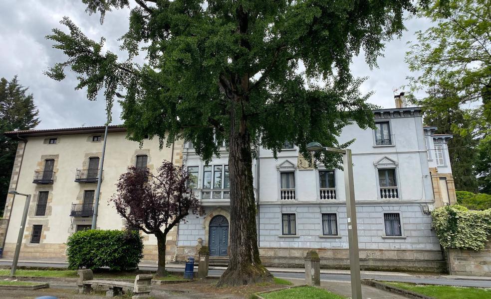 El árbol que sobrevivió a la bomba atómica goza de buena salud en Durango