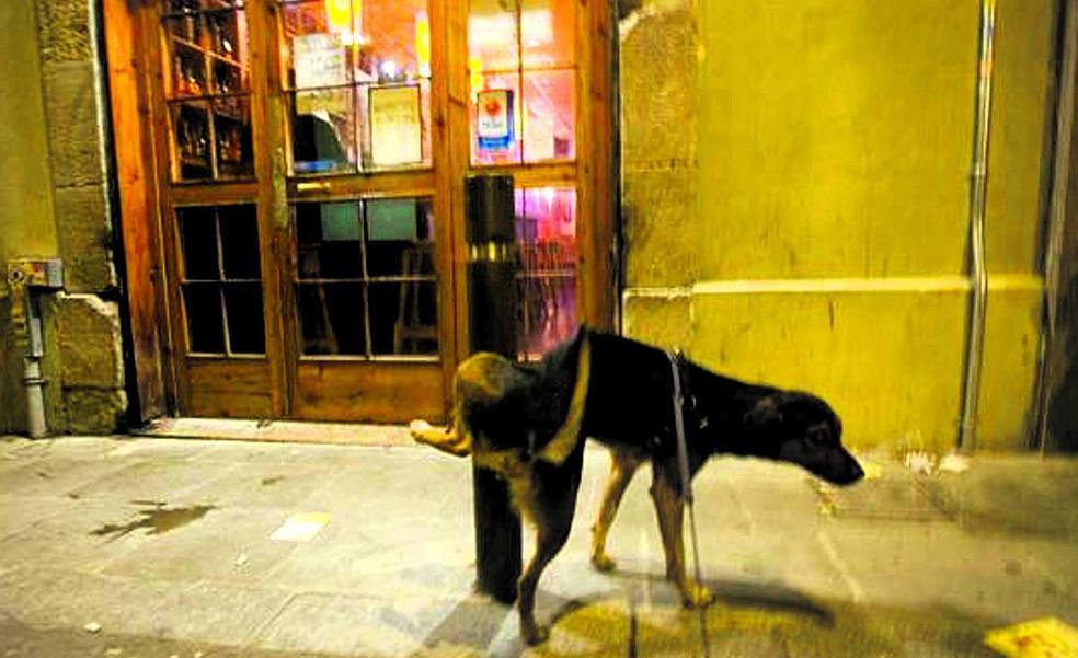 Aplican un repelente de orina para perros en Erandio ante las quejas vecinales