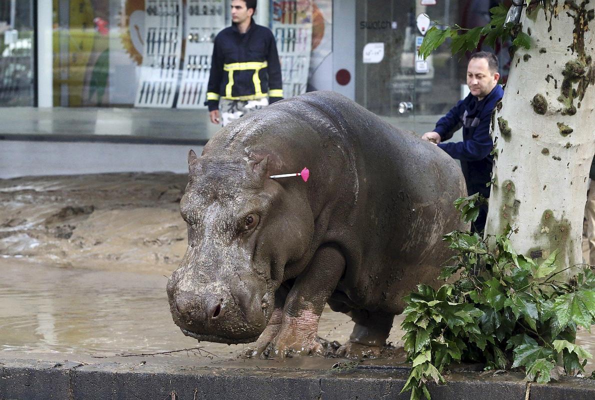 Leones, tigres y lobos merodean por las calles de la capital de Georgia tras escapar del zoo