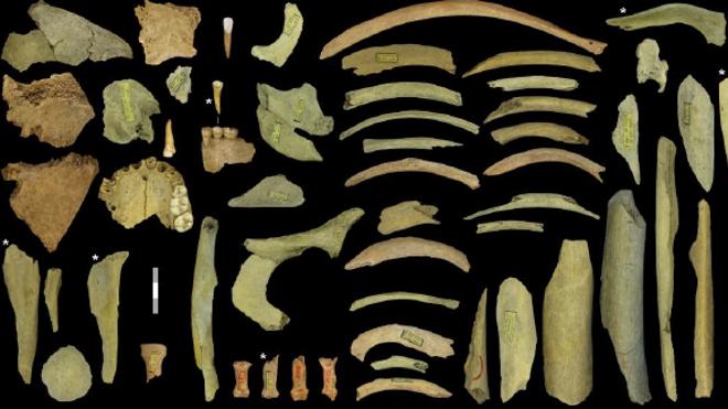 Descubren la primera evidencia de canibalismo en neandertales del norte de Europa