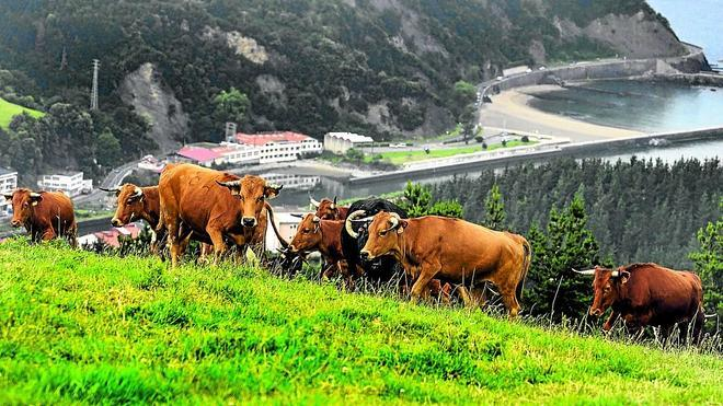 Bildu pide al Ayuntamiento que no permita vaquillas ni sokamuturras en Vista Alegre