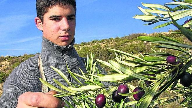 El aceite toma la palabra en Rioja Alavesa