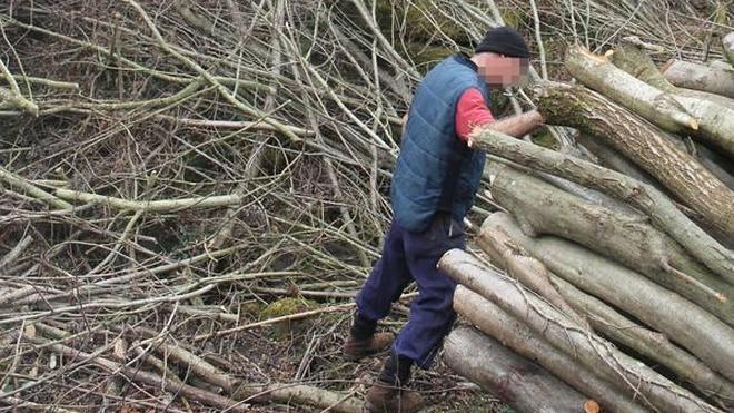 La Fiscalía investiga la tala «salvaje» en Abanto de un bosque centenario con más de 300 árboles autóctonos