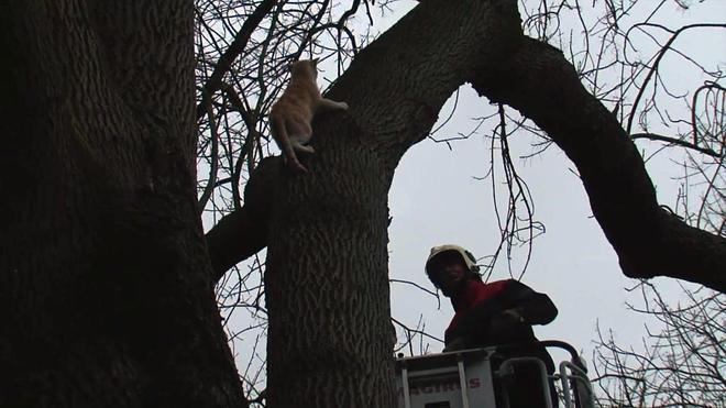 Rescate frustrado de un gato en el parque Munoa de Barakaldo