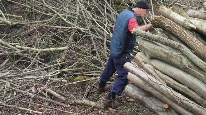 La Diputación sanciona a una empresa cántabra por una tala en Abanto