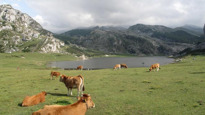 Covadonga y los lagos: el corazón de los Picos de Europa