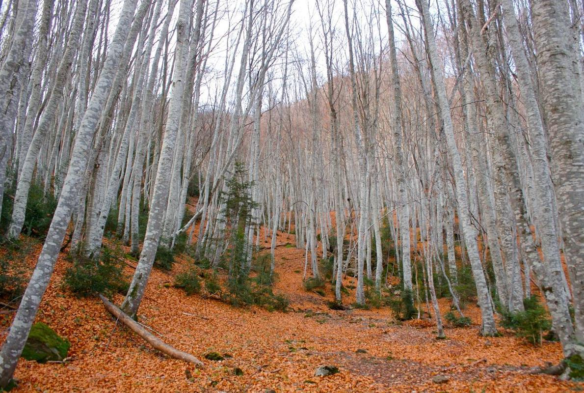 El Betato, el bosque prohibido del Alto Aragón