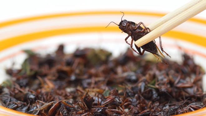 Los insectos llegan a la mesa